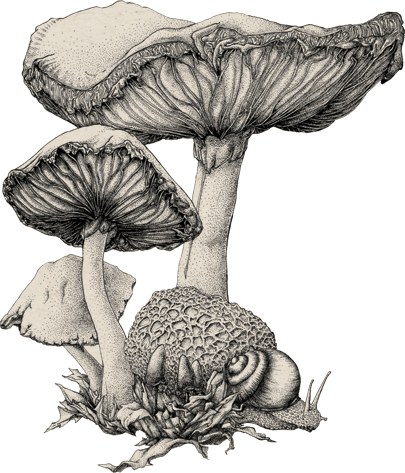 Hindiba Nature House  - Illustration Of The Mushrooms